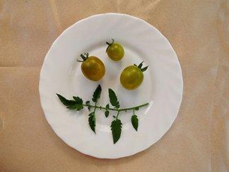 Черри Зелёный Виноград