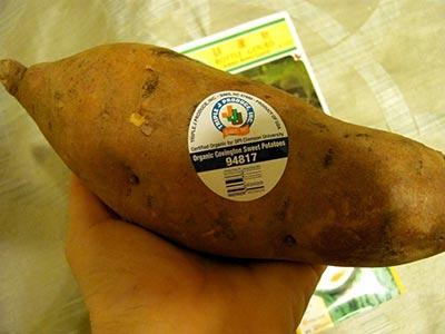 Клубень батата сорта Ковингтон с этикеткой органического магазина