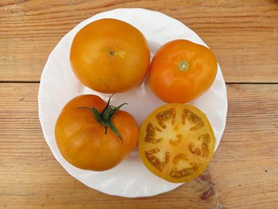 Томат Мальвика оранжевая