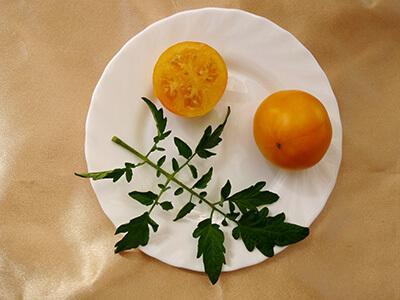 Томат Мармелад желтый