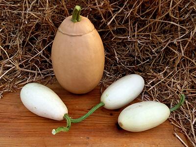 Тыква Белое яйцо