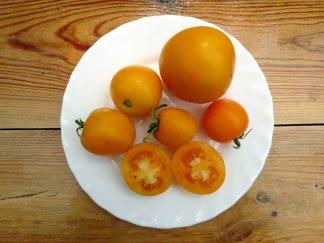 Томат Золотой мандарин