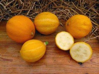 Кабачок Лимон