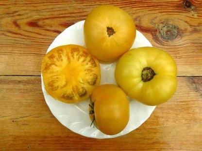 Томат Гном апельсиновый крем