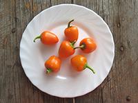 Перец Мини-белл оранжевый
