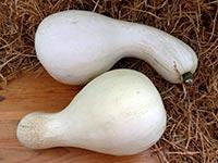Тыква Кушо белый Cushaw white